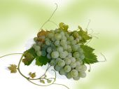 Cluster of green grapes on a lime background, macro (still life). — Stock Photo