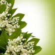 Gentle lilies of the valley on a white background. — Stock Photo #65762285