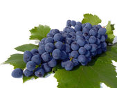 Cluster of blue grapes on a white background, macro  (still life). — Stock Photo