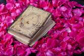 Book of roses — Stock Photo