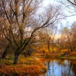 Colorful Autumn River With in Wild Woods — Stock Photo #62197593