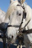 Portrait of a horse — Stock Photo