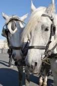 Two horses. — Stock Photo