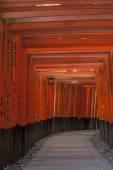 Tori on Inari shrine — Stock Photo