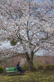 Relax under sakura tree — Stock fotografie