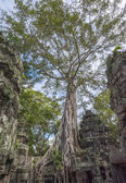 Angkor Ta Prohm in Cambodia — Stock Photo