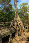 Ta Phrom temple — Stock Photo
