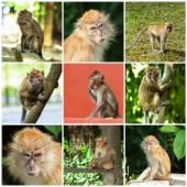 Cute Monkeys — Stock Photo