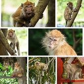 Monkeys — Stock Photo