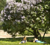 Moscow, Lilac garden — Stock Photo