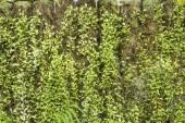 Fond de feuilles vertes — Photo