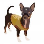 Chihuahua Dog 1 — Stock Vector