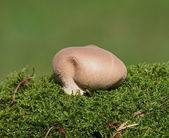 Mushrooms and moss on green background, series — Stock Photo