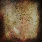图截面的树干上白色背景孤立 — 图库照片