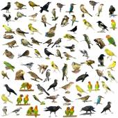 Set of 81  birds isolated on white background — ストック写真
