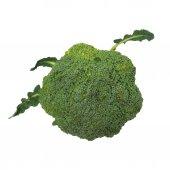 Fresh broccoli isolated on white background — Stock Photo