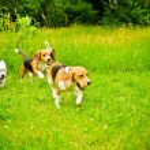 Three dogs — Stock Photo #54591979