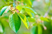 Buds on the tree — Stock Photo