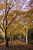 тоннель из деревьев — Стоковое фото