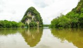Mangrove forest — Foto Stock