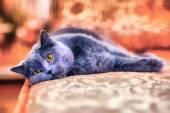 üzgün kedi — Stok fotoğraf