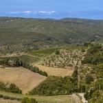 Landscapes of Tuscany in Radda Chianti — Stock Photo #53327289