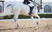 Chevaux de dressage — Photo