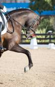 Dressage Horses — Stock Photo