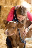 Veterinary on a farm — Stock Photo