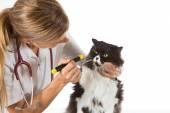 Veterinary clinic with a kitten — Stock Photo