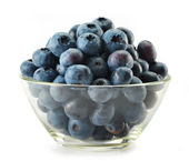 Northern highbush blueberry — Stock Photo