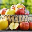 Organic apples in the garden. Balanced diet — Stock Photo #62154423