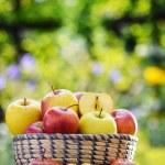 Organic apples in the garden. Balanced diet — Stock Photo #62154495