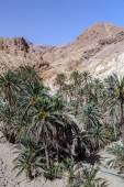 Oasis Chebika Sahara desert, Tunisia, Africa — Stock Photo