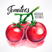 Watercolor tomatoes — Stock Vector