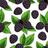 Background with ripe bramble — Stock Vector