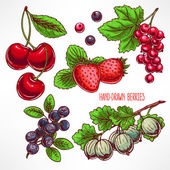Set with different berries — Stock Vector