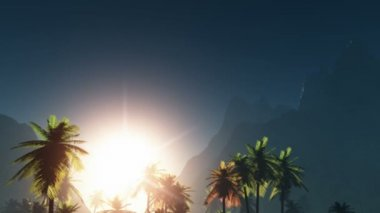 Fog glowing sun and palms — Stock Video