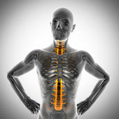 Human bones radiography scan image — Stock Photo