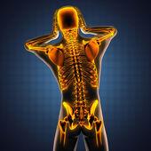 Human radiography scan  with glowing bones — Stockfoto
