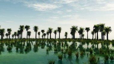 Palm trees at laguna island. sunny day — Stock Video
