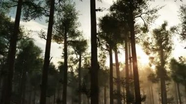 A beautiful morning with sunrays shining through the forest trees — Stock Video