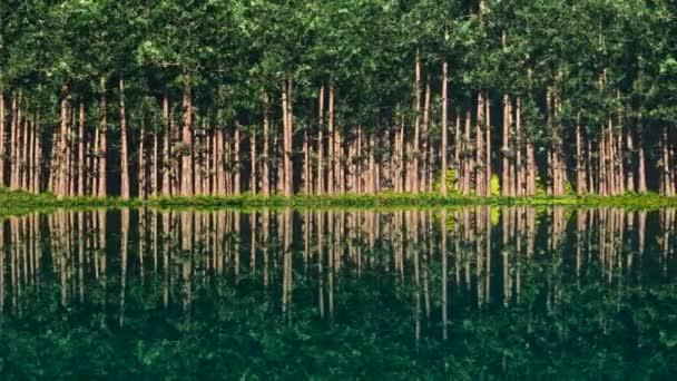Lake with trees at coast line — Vidéo