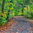 HDR of a forest path — Stock Photo #63149161