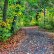 HDR of a forest path in soft focus — Stock Photo #63374283