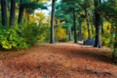 Lazy walk through the woods in HDR — Stock Photo