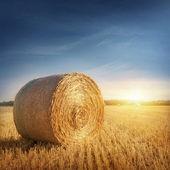 Round bales of straw — Stock Photo