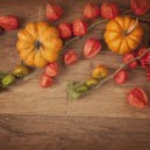 Orange pumpkins and physalis — Stock Photo #54401895