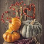 Green and orange pumpkins — Stock Photo #54401997