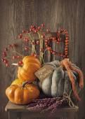 Green and orange pumpkins — Stock Photo